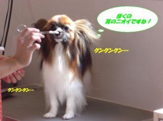 12-09_20090715174108.jpg