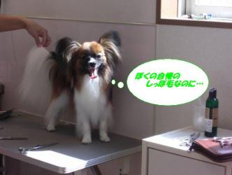 12-11_20090715174124.jpg