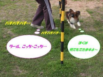 12-15_20090325131737.jpg