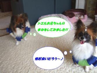 12-15_20090619114906.jpg