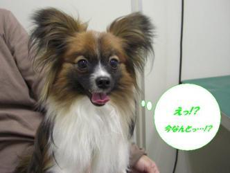 17-04_20090218200210.jpg