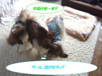 17-07_20090417194647.jpg