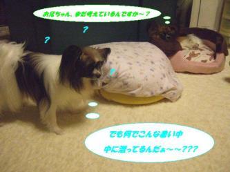 18-03_20090830141052.jpg