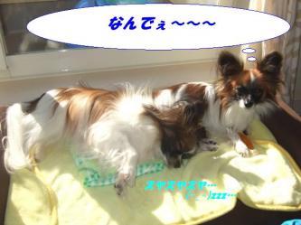 19-01_20081222152052.jpg