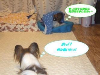 21-04_20090821161052.jpg