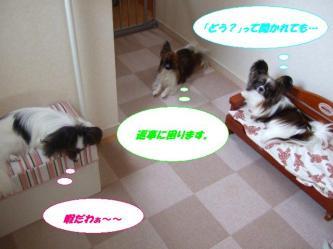 23-05_20090823141516.jpg