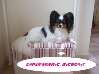 23-08_20090823141547.jpg
