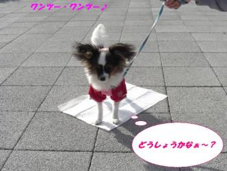 23-a_20081226192604.jpg