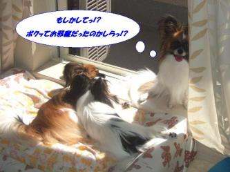 25-03_20090827200805.jpg