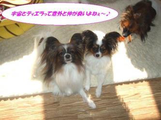 26-01_20090226204622.jpg