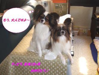 26-01_20090327102701.jpg