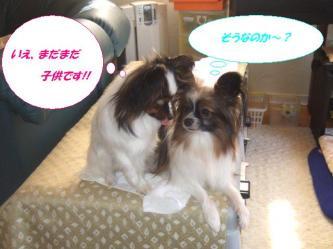 26-02_20090327102713.jpg