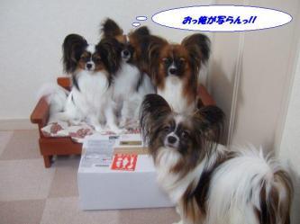 26-02_20090526232539.jpg