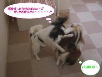 26-08_20090226204711.jpg
