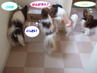 26-10_20090527201245.jpg