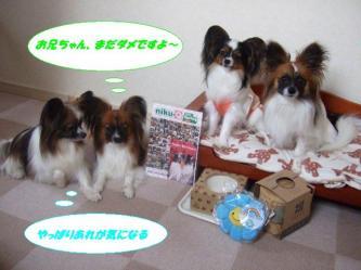 26-11_20090527201254.jpg