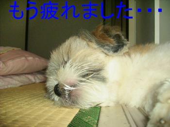 P8160136疲れ・・・