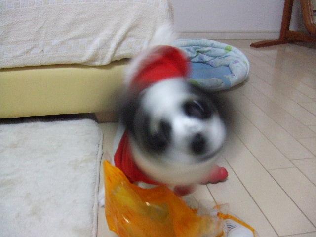 2006_0209ie0020.jpg