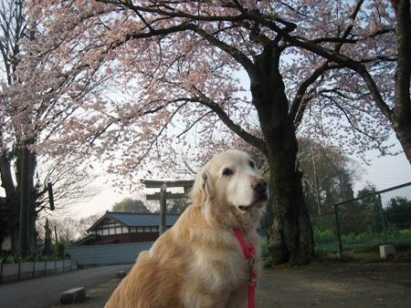 090407桜