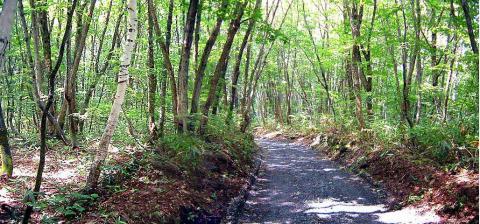 栃川の山道