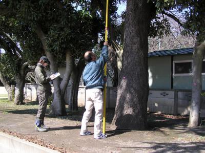 100331樹木調査