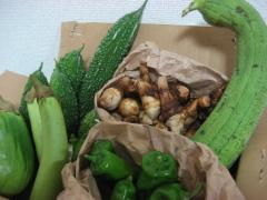 鹿児島野菜たち