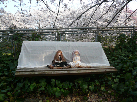 新緑と桜(//^-^//)