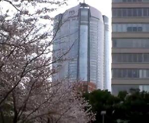 東京サクラ