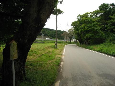 長久寺の楓並木