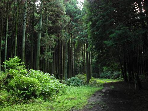 旧中山道・小川の関跡付近