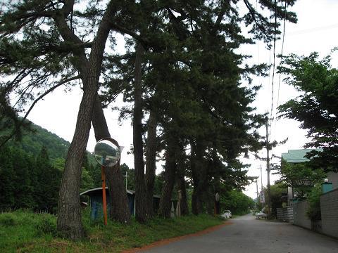 梓河内の中山道松並木