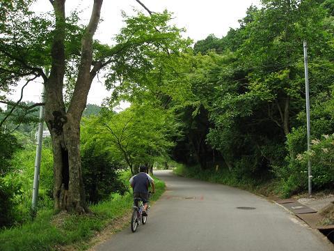 旧中山道・久礼の楓並木
