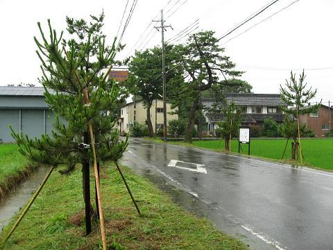 葛籠町の旧中山道松並木