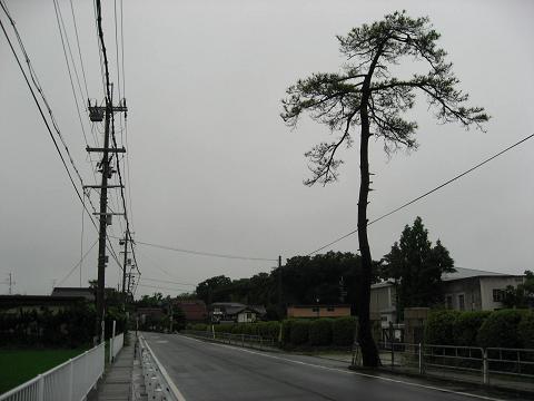 旧中山道と名残松