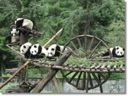 pandapans.jpg