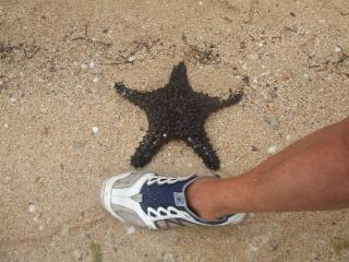 Star fish と英語でいいます。ヒトデさん