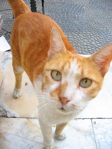 egyptian cat-1