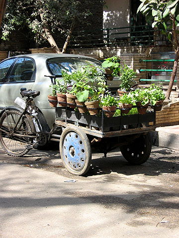 plants on the tricycle