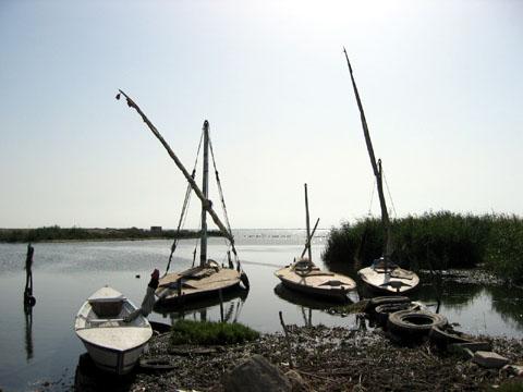 lake manzala-1