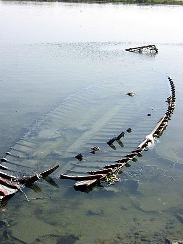 lake manzala-2
