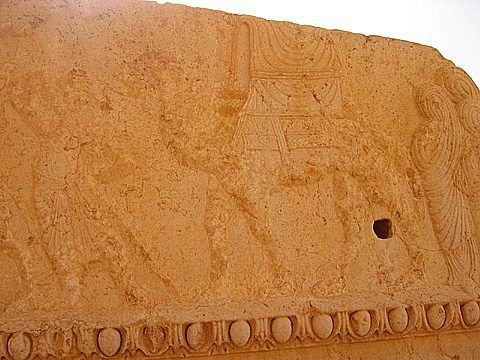 palmyra-camel1
