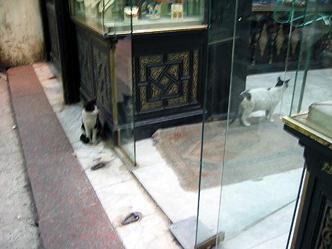 egyptian cat-19