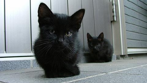 黒猫 2819