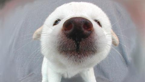 白犬 4999