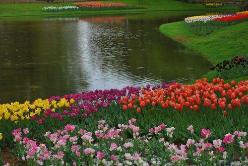 池に寄り添う華