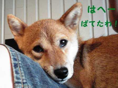2008_08160075.jpg