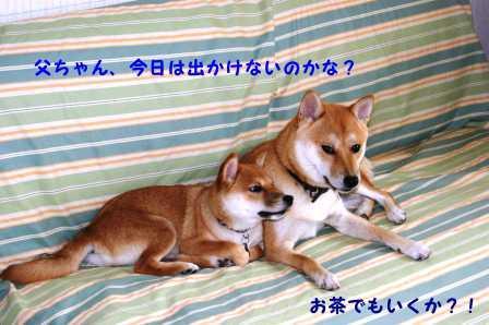 2008_09270069.jpg