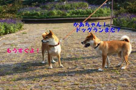 2008_10050117.jpg