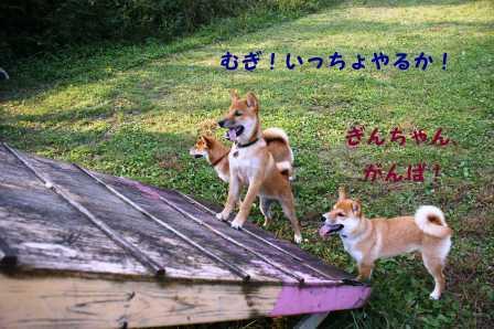 2008_10050171.jpg