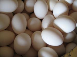 卵いっぱい